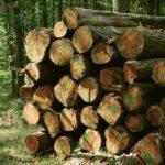10/2018 – Protokol z otevírání a hodnocení cenových nabídek na prodej dřeva MODŘÍNY 2018