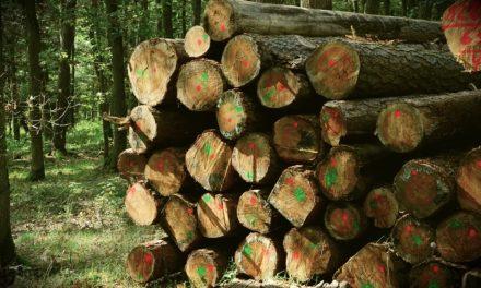 5/2018 – Výběrové řízení – prodej dřeva – MODŘÍNY 2018